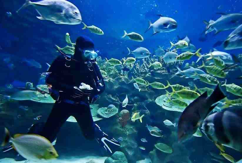 India best scuba diving in goa