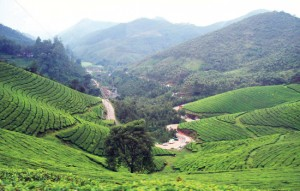 munnar holiday destination in india