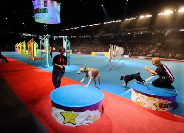 Ottawa Fun thigs with Superdogs