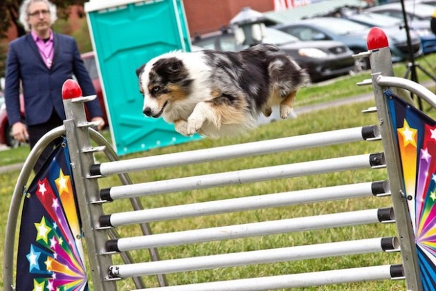 Superdogs ottawa