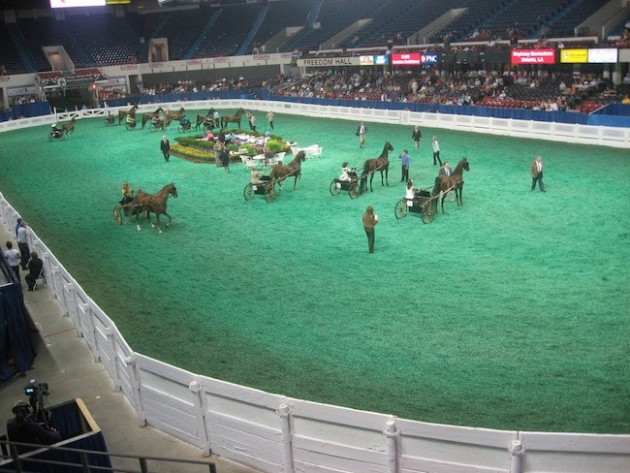 world-class horse shows