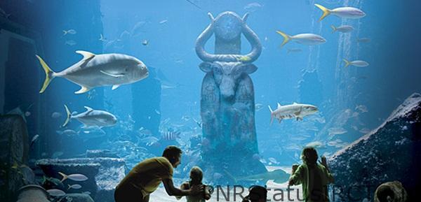Mesmerizing marine habitat at Atlantis